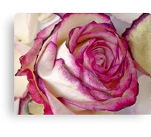 White Pink rose with petals 2 Canvas Print