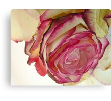White Pink rose with petals 5 Canvas Print