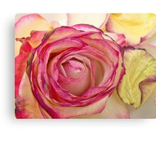 White Pink rose with petals 6 Canvas Print