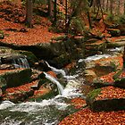 autumn brook by danapace