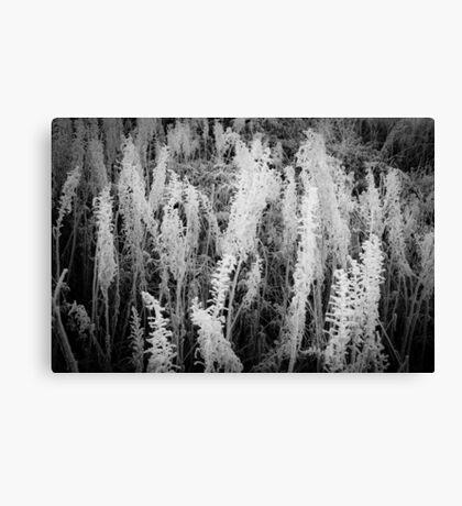Frosty monochrome Canvas Print