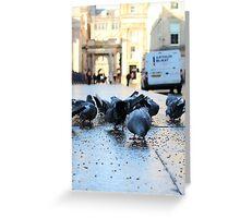 Glaswegian Pigeons Greeting Card
