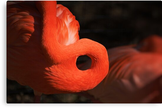 Flamingo Curves by HoltPhotography