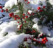 Winterberry and Pine by Linda Marlowe