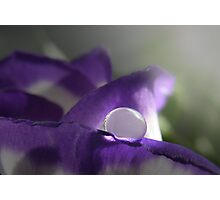 Natures Pearl  Photographic Print