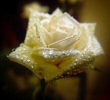 White Rose by Richard Hamilton-Veal