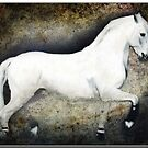 Afamado, Andalusian Stallion by Bine