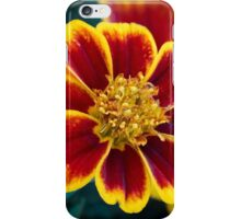 Red and Yellow Marigold iPhone Case/Skin