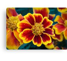 Red and Yellow Marigold Canvas Print