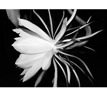 Queen of the Night (B&W) Photographic Print