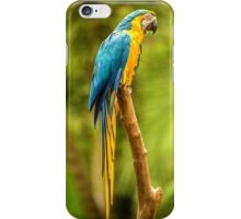 Parrot in the Rainforest near Iguazu, Brazil iPhone Case/Skin