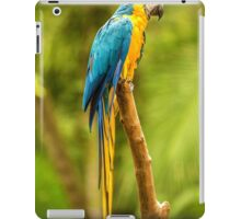 Parrot in the Rainforest near Iguazu, Brazil iPad Case/Skin