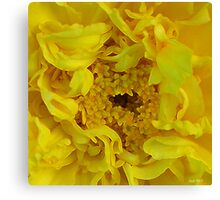 Happi Mothers Day Canvas Print