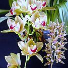 Orchid 8 by saseoche