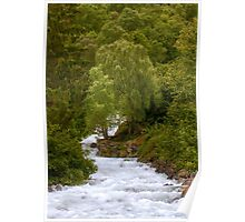 Trees and Feigefossen Creek, Lusterfjord, Norway Poster
