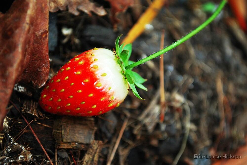 Strawberry by Erin-Louise Hickson