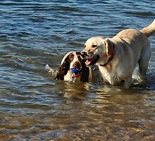 Best Pals Poppy and Izzy by lynn carter