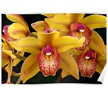 Yellow Orchids, Dana Point, California Poster