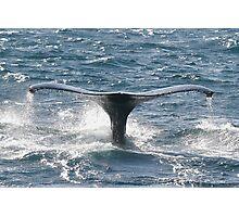 Whale Fluke Photographic Print