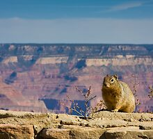 Squirrel on the Edge by Nickolay Stanev