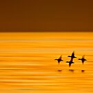 Flying in Formation by David Orias