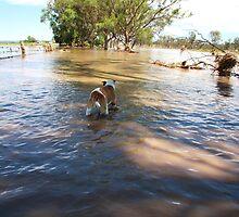Dog on drive by tarnyacox