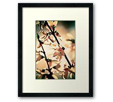 nostalgic spring Framed Print
