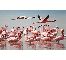 Fly Past, Lesser Flamingos, Lake Nakuru, Kenya Photographic Print