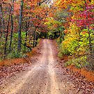 Autumn Country Road by NatureGreeting Cards ©ccwri