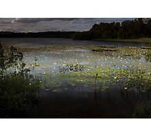 water lillies on loch kinord Photographic Print