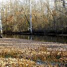 Tributary In Autumn by WildestArt