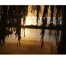 Willows on the Murray. Photographic Print