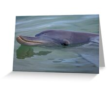 Dolphin. Greeting Card