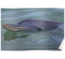 Dolphin. Poster