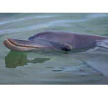 Dolphin. Photographic Print