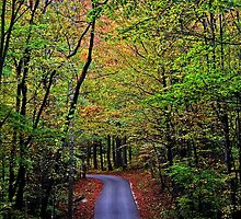 A turn on life's road, a new beginning.. by Terri~Lynn Bealle