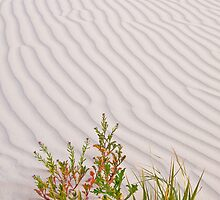 Sand Dune - Western Australia by Stephen Permezel