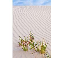 Sand Dune - Western Australia Photographic Print