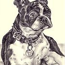 Boston Terrier by Kimberley East
