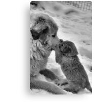 Double Paw Kiss Canvas Print
