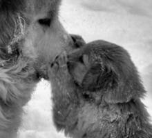 Double Paw Kiss Sticker