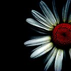 Daisies Have Darksides too by Jenny Miller