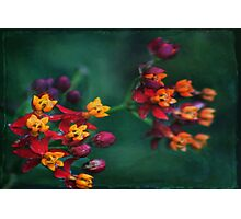 The World of Tiny Flowers Photographic Print