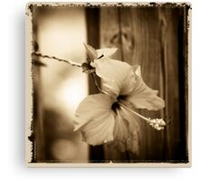 hibiscus in brown Canvas Print