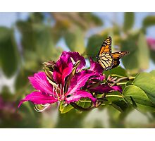 First monarch of 2015! Photographic Print
