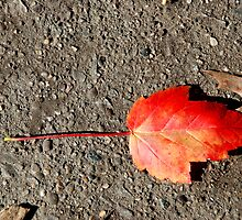 Red Leaf by LizzieMorrison