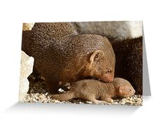 Dwarf Mongoose Greeting Card