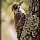 Arizona Woodpecker, Madera Canyon by Kimberly Chadwick