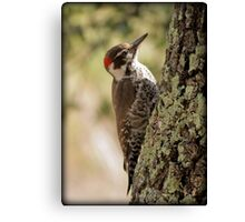 Arizona Woodpecker, Madera Canyon Canvas Print