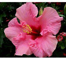 Bright hibiscus Photographic Print